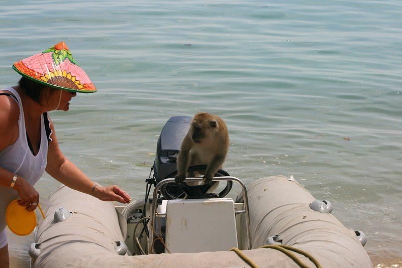 Monkey Bay bien-sûr ...