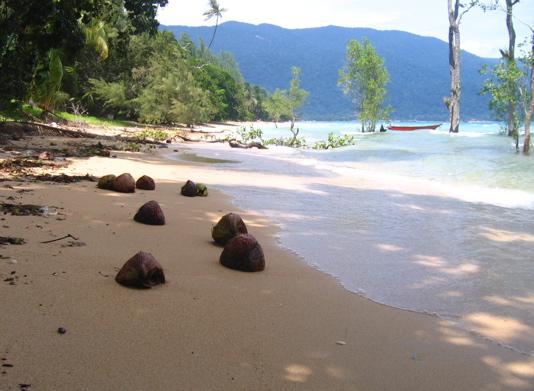 ABC Beach ! Noix de coco et sable doré