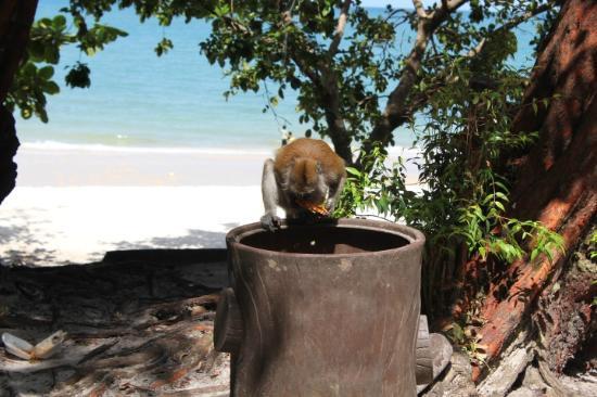 La plage de tengkorak et ses singes...